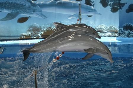 Actuación de los delfines en el Zoo de Barcelona, en el 2008.